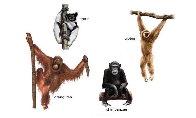 Primates | Animal Culture